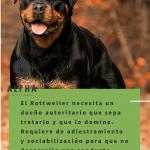 Rottweiler los cuidados