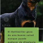 Rottweiler Salud